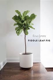 best 10 indoor plant decor ideas on pinterest plant decor