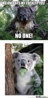 Koala Meme - mad koala by azaz90 meme center