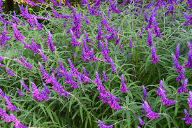 plants that keep mosquitoes away 4 drought tolerant plants that repel mosquitoes