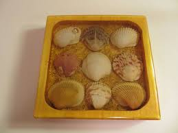 What Is A Decoration Sea Shell Drink Coaster 6 Steps