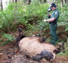 report poaching wildlife violations washington department of