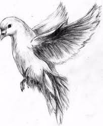golden retriever pencil drawing art inspiration pinterest