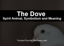 the dove spirit a complete guide to meaning and symbolism