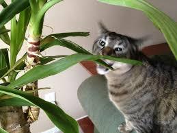 100 indoor plants for cats garden golden pothos popular