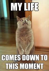 My Life Is Over Meme - my life cat meme cat planet cat planet