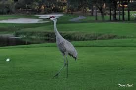 large birds birds by dave