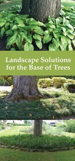 tree landscape pin jpg ssl 1