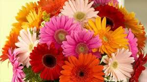 beautiful flowers fun facts daisy tulip youtube