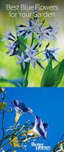 Best Shades Of Blue Flower Field Wallpapers Best Wallpapers Flower Ideas