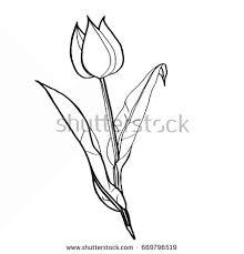 vector hand drawn tulip black sketch stock vector 168118883