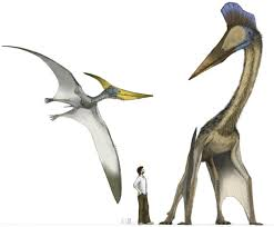 how huge flying reptiles got airborne
