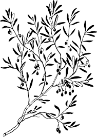 olive tree branch ink tree branch