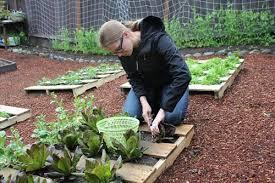 Wood Pallet Garden Ideas 10 Pallet Gardening Ideas Pallets Designs