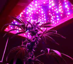 led marijuana grow lights do led marijuana grow lights work better than other grow lights