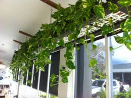 indoor vine plant green wall for your office why vertical wall gardens are the new