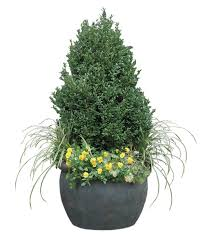 Shrubs For Patio Pots Wonderful Winter Containers Fine Gardening