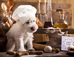 are onions for dogs here are 47 common foods and plants that are toxic to dogs and