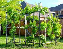 backyard trellis ideas u2013 outdoor decorations