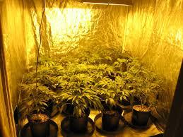 Grow Room Lights Top Marijuana Marijuana Grow Rooms Learn Growing Marijuana