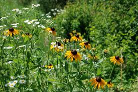 iowa native plants background