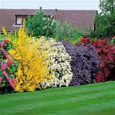 Home Backyard Ideas 164 Best Home Yard Images On Pinterest Landscaping Backyard