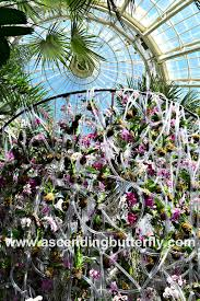 Botanical Garden Orchid Show Ascending Butterfly Win A Pair Of Tickets To Nybg S The Orchid