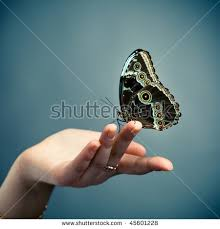 butterfly on finger stock images royalty free images vectors