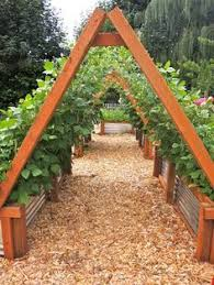 Bamboo Cucumber Trellis If You U0027re Looking To Grow Cucumbers In Your Home Garden Here Are