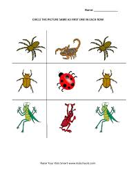 insects printables 28 images sorting worksheets for