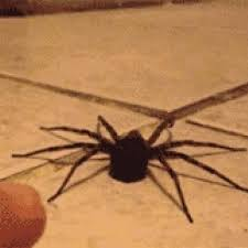 Sad Spider Meme - sad cat diaries meme hopes to rest on a computer keyboard to fix the
