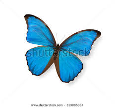 blue butterfly isolated on white stock illustration 109362665
