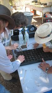 nursery native plants hahamongna nursery arroyo seco foundation