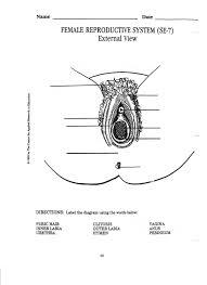 Hymen Female Anatomy Worksheet Female Reproductive System Worksheet Luizah Worksheet