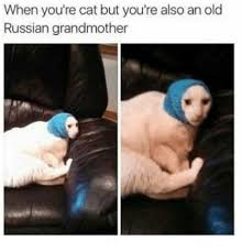 Grandmother Meme - when you re cat but you re also an old russian grandmother meme on