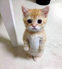 Sad Kitten Meme - meme creator cute sad cat meme meme generator at memecreator org