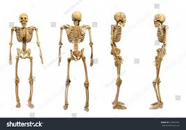 Halloween Skeleton Pattern by Pattern Human Skeletons Isolated On White Stock Photo 518245231