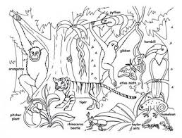 tropical coloring pages rainforest animals for kids printable rainforest animal coloring