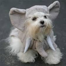Small Puppy Halloween Costumes Small Dog Halloween Costumes Swank Pets Dog Blog