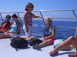 dolphin trips in gran canaria u2013 the cunning canary