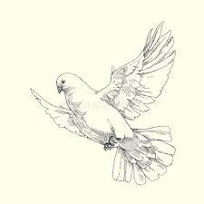 white dove vector hand drawn illustration stock vector image