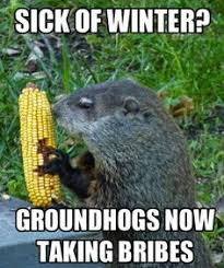 Groundhog Meme - the most interesting groundhog in the world my contributions to