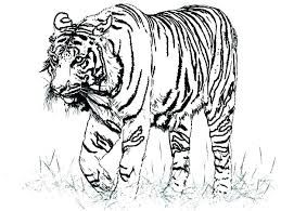 coloring page tiger paw coloring page tiger paw free pages animals realistic a drawing of t