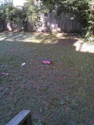 lone star parson backyard blasters