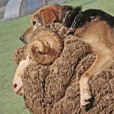 10 hilarious and cute pictures of animals riding other animals