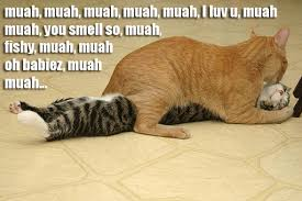 Kiss Meme - kissing cats 1funny com