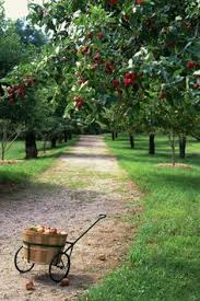Best Fruit Tree For Backyard This Photo Was Uploaded By Fruitnut Inspiring Ideas