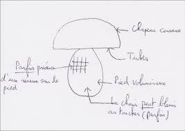 comment cuisiner des bolets comment cuisiner des cepes great cpes la bordelaise with comment