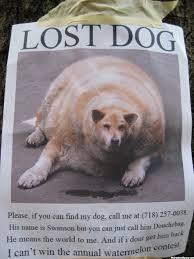 Lost Dog Meme - lost dog poster myconfinedspace