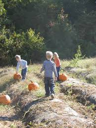 Chesterfield Pumpkin Patch 2015 by Completely Kids Richmond Pick Your Own Apples Pumpkins