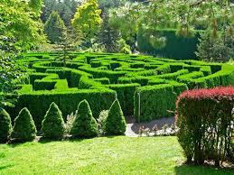 Garden Botanical File Vandusen Botanical Garden Maze Jpg Wikimedia Commons